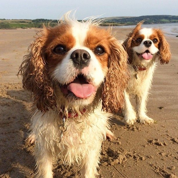 Poppy and DollyDog, hangin' at the beach!