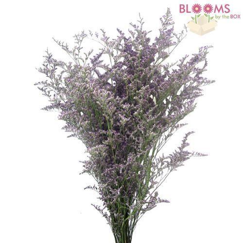 Wholesale Limonium Misty Blue - Blooms by the Box