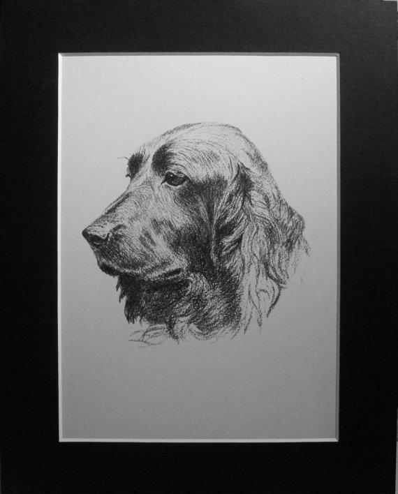 1935 FIELD SPANIEL DOG Vintage original C Francis by Hollysprints, £11.95