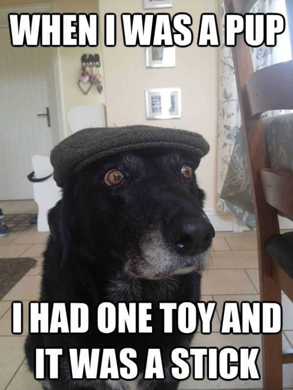 Funny Friday: When I Was a Pup   Grandpa Dog!! http://www.happyhealthyandprosperous.com/funny-friday-when-i-was-a-pup/