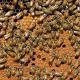http://germany.mycityportal.net - Deutschland Deutschland verhindert EU-Pestizidverbot gegen das Bienensterben - ZEIT ONLINE - #germany
