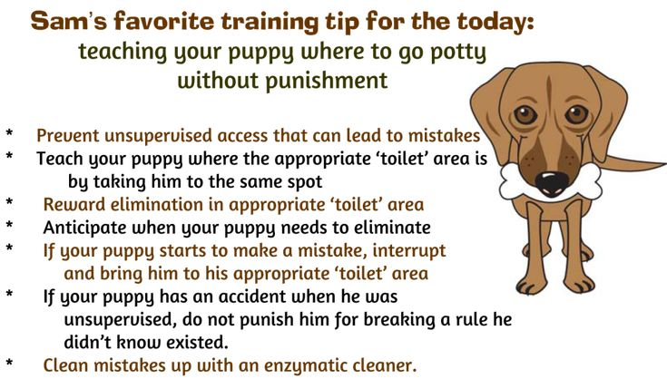 tips for successfully potty training your puppy without