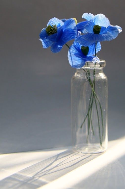 Tibetan poppies - glass height 5.5 cm, flower diameter 2-2.5 cm Air-drying, transparent resin clay.