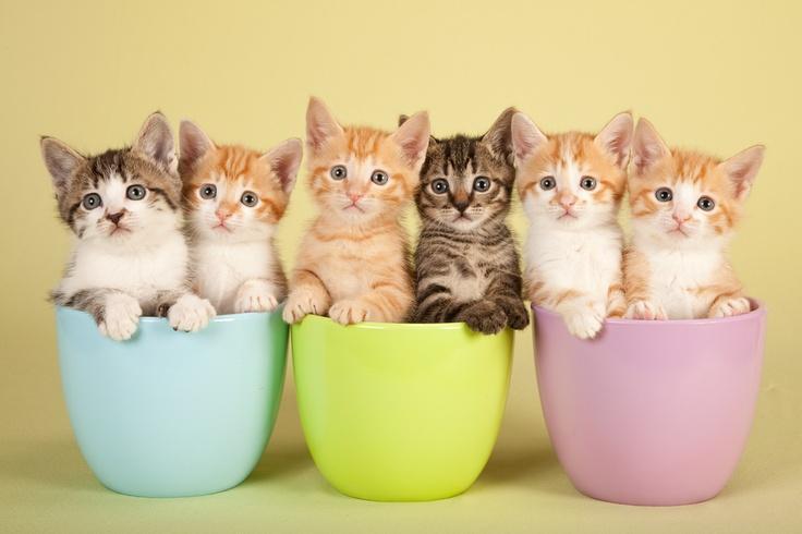 Park Art My WordPress Blog_Where Can You Buy Teacup Kittens
