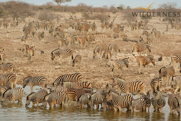 Ongava Lodge – Nothing beats a dramatic wildlife scene at an Etosha waterhole in the height of the dry season #Africa #Safari #Namibia
