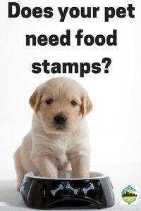Does your pet need food stamps? Help with pet care when you can't afford it.
