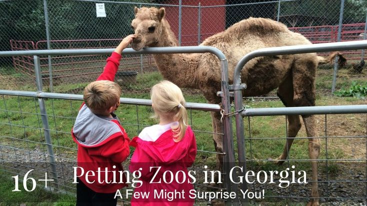 Wondering where is the best petting zoo near me? We have a list of 16+ animal farms in Georgia with petting zoos. A few will likely surprise you!