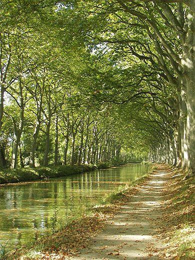 Canal du Midi , le chemin de halage toujours ombragé idéal pour le vélo !!