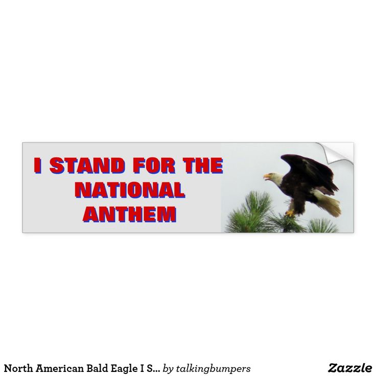 North American Bald Eagle I Stand For The Anthem Bumper Sticker. With Donald Trump and the NFL at a war of words and the Football and Basketball players protesting during the playing of the Star Spangled Banner to protest racial and social inequity, this can be your bold statement of support for our country and the brave members of the military that give us our freedom.