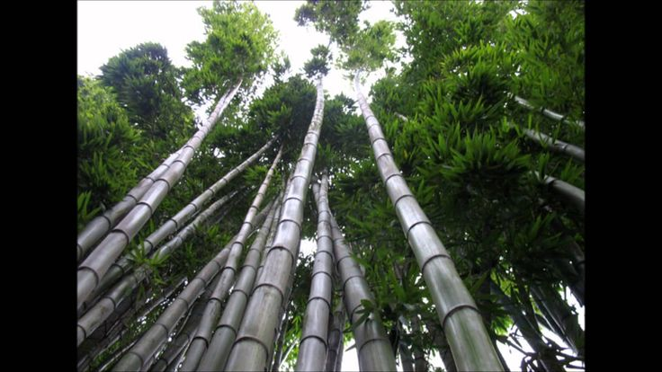 Les Brown  Chinese Bamboo Tree Story You planted the seed, you keep working towards your dream. Instant results are not going to happen. www.beyondexpectationsmarketing.com