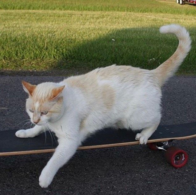 I Betcha This Cat Can Do A 360 Backflip Kick Flip Don T Forget To Join The Discord Server Link In Bio Cursed Kedi Sevimli Kediler Hayvanlar