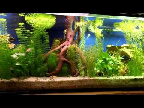 Mi receta para un acuario comunitario, de agua dulce, bien plantado y con peces tropicales pequeños. | Blog de Acuariofilia, Biología y Medioambiente (Antonio Castro)