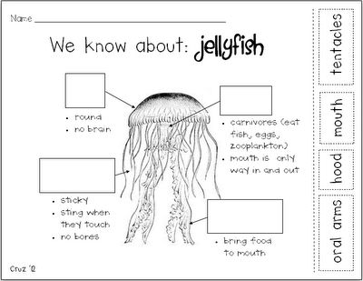 my crazy life in kindergarten: Jellyfish-ing | Ocean | Jellyfish ...