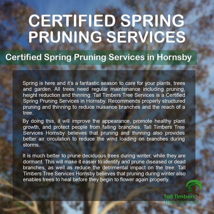 Certified spring pruning services in Hornsby. Visit ↓ https://talltimberstreeservices.com.au/
