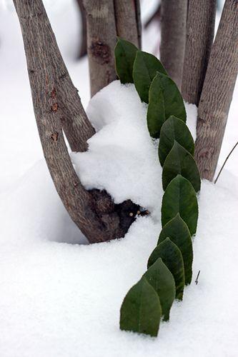 procession jeux de feuilles dans la neige - game of leaves in the snow