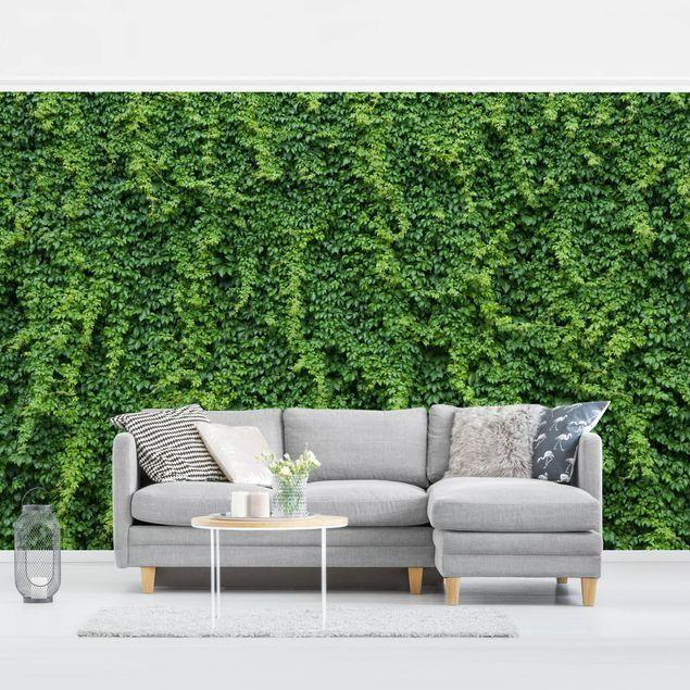 Selbstklebende Tapete Efeu Wand In 2020 Tapeten Kaufen Selbstklebende Tapete Outdoor Sofa