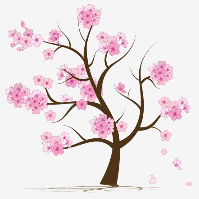 Cherry Blossom Tree Cherry Blossom Sakura Tree Pink Png And Vector With Transparent Background For Free Download Cherry Blossom Tree Blossom Trees Cherry Blossom Drawing