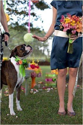 #dog #wedding #photograph #boxerGroomsmen, Puppies, Boxer Dogs, Boxers Dogs, Photographers Boxers, Pets, Dogs Wedding, Wedding Dogs, Weights Loss