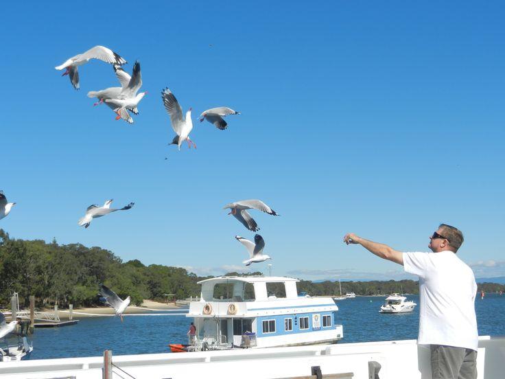 Feeding the Gulls aboard a Coomera Houseboat, #coomerahouseboats   #Goldcoast  #houseboat  #holiday  #holidays  #boating  #fishing  #Houseboating
