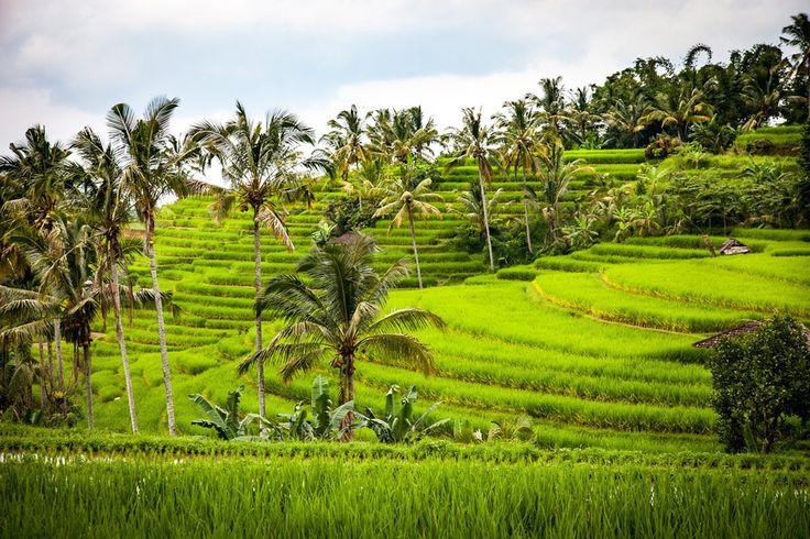Reisebericht Bali Rundreise Tipps: Bali mit Kind, Roller und Backpack :http://levartworld.de/reisebericht-bali-die-insel-der-goetter/