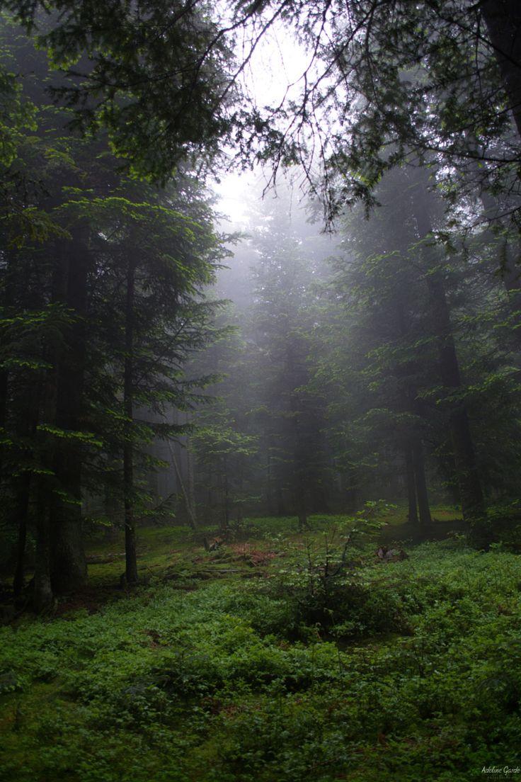 Photo le chemin du Paradis par adeline garde on 500px