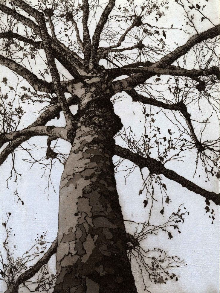 "London Plane  ""A partner to Silver Birch, Winter this image was inspired by a tree I spotted whilst visiting Tate Britain one November."" - © Chrissy Norman"