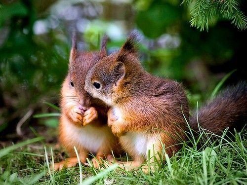 Wij komen al in de herststemming! Vandaar dat wij prachtige eekhoornfoto's hebben opgezocht. Welke foto vind jij het