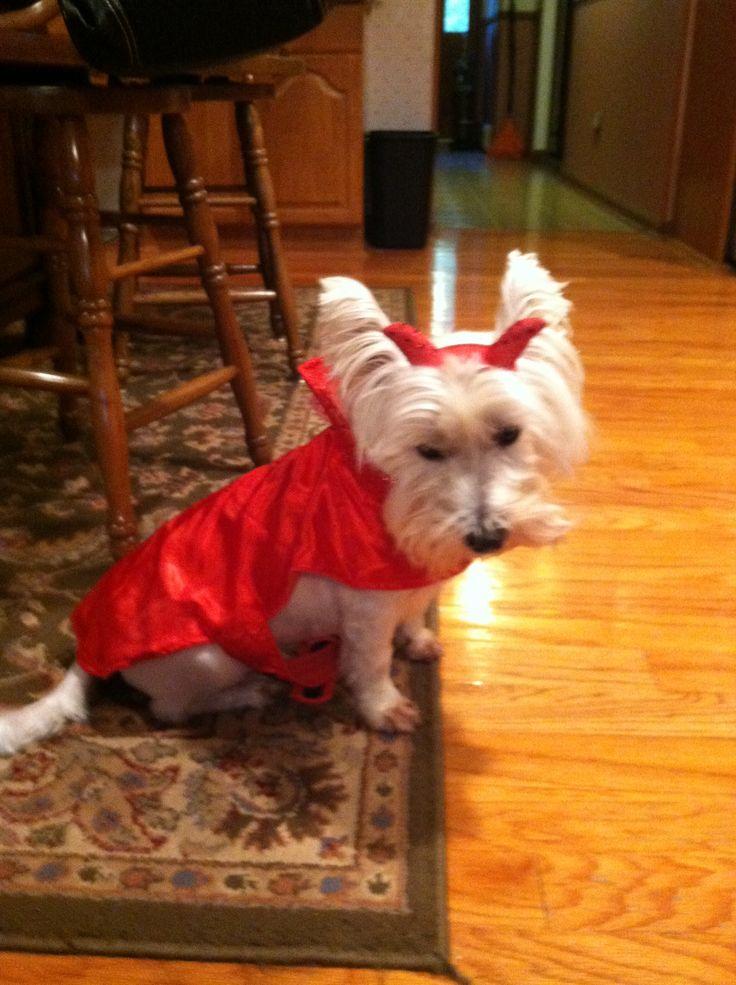 Cheer Bear Halloween Costume