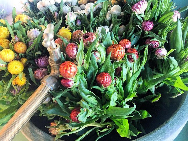 A sink full of paper daisies... #flowers #driedflowers #plantshop #twigandmoss
