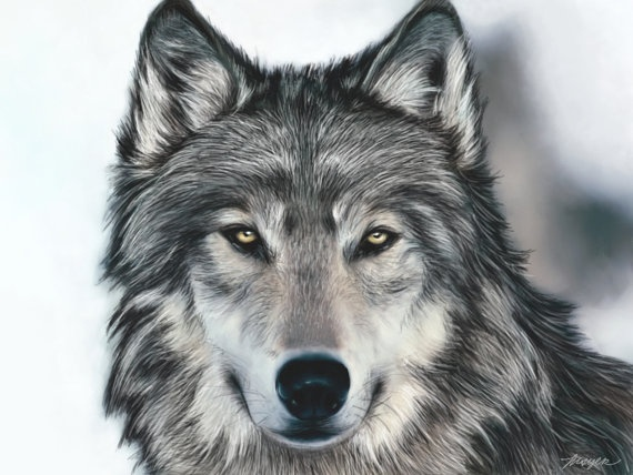Wolf Art Print by TheKnottedRaven on Etsy, $14.50