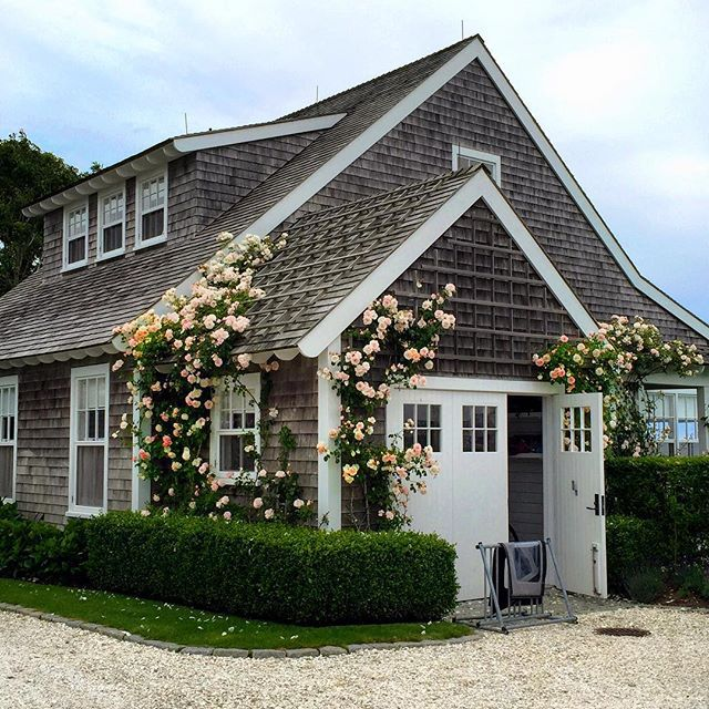 Rosy even on a cloudy day. #sconset #nantucket