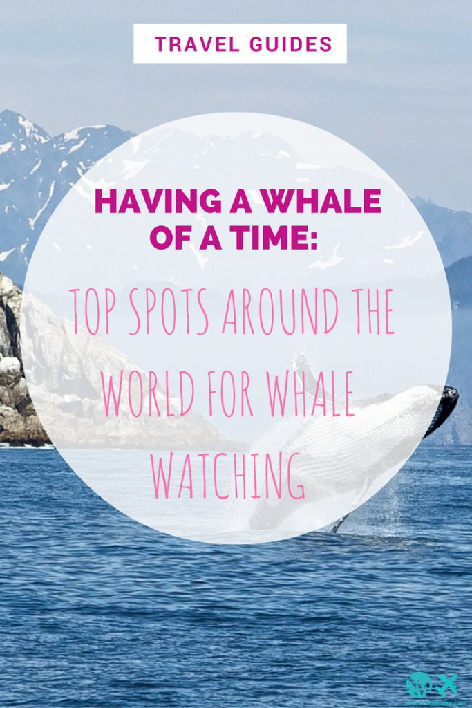 Having a whale of a time: Top spots around the world for whale watching #bloggers #blogtips #entrepreneur #smallbusiness #online #tips #blogging #seo #2017 #newyear #smallbusinesstips #toread #longread