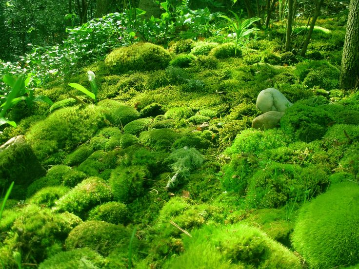 To grow moss: Add cup of live culture yogurt, blend with handful (1/4-1/2 cup) sphagnum moss or sample live moss from your area (best because it's adapted to your climate). Can also add splash of buttermilk and/or flat beer, pinch of sugar. Paint on with brush, keep moist using spray bottle or mist hose setting. Growth within 2 weeks. Experiment for best formula.