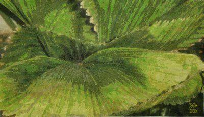 Green Leaves, my Cross Stitch artwork  based on my original photo taken  at the Botanic Garden, Helsinki, Finland