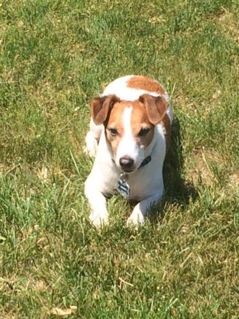 89 best Found Pet Tails images on Pinterest Dog cat, Find pets - lost pet poster