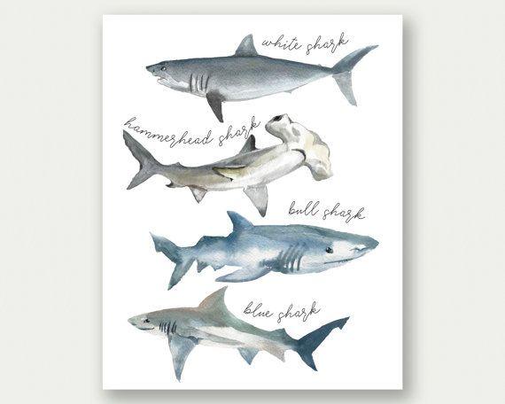 Shark Poster, Shark Print, Shark Species, Watercolor Sharks, Shark Printable…