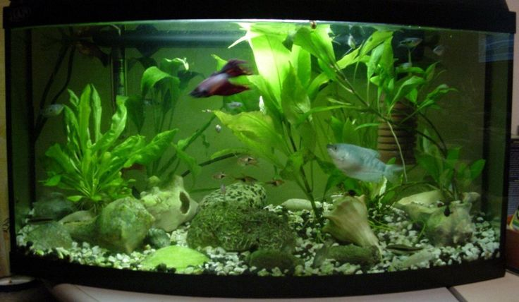 Fish Tank Decoration ~ http://www.lookmyhomes.com/amazing-fish-tank-decoration/