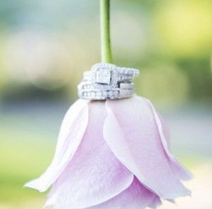 Flower color and ring pic