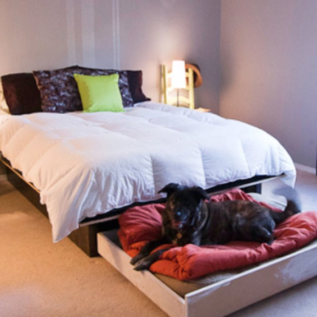 Dog trundle bed. Gage and Olive would love this! (With