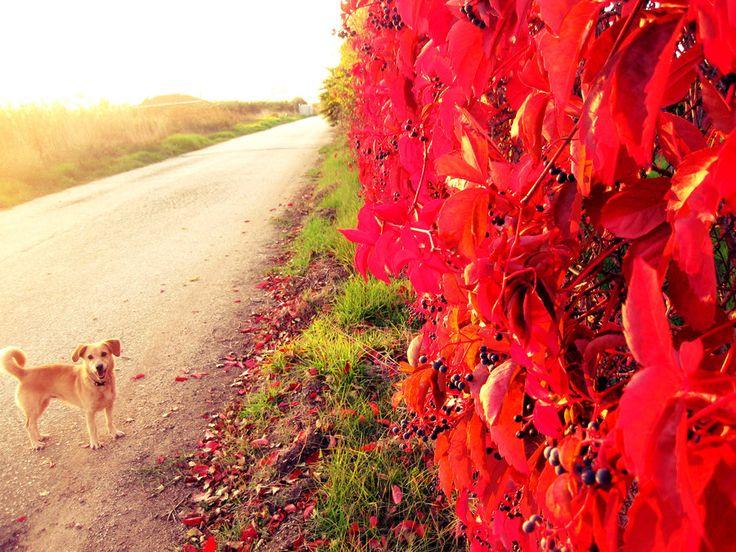 Walk by AndrianaS.deviantart.com on @DeviantArt