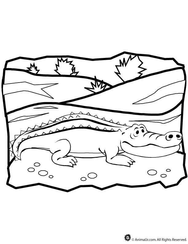 Marvelous Gator Coloring Pages 23 Alligator Coloring Page