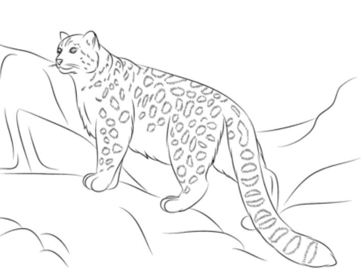 10 Best Leopard Coloring Pages For Kids Di 2020