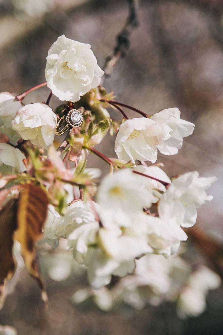 best flower images on pinterest flowers spring and flower