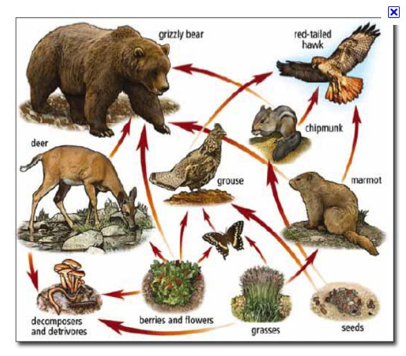 Relationships in Ecosystems. It shows the energy being transfered from plant to animal to other animals. Can also be a great lesson for our unit on communities and populations!