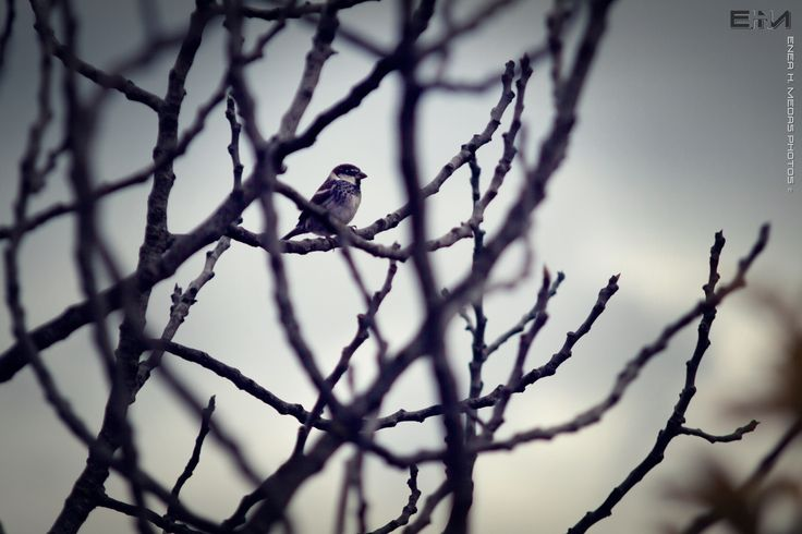 Primavera all'orizzonte... - null