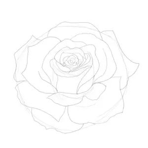 25 trending how to draw roses ideas on pinterest roses drawing how to draw a rose sketch ccuart Image collections