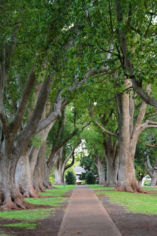 Shady, tree-lined path in Queens Park, Toowoomba, Queensland