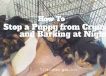 How To Stop A Puppy From Crying And Barking At Night