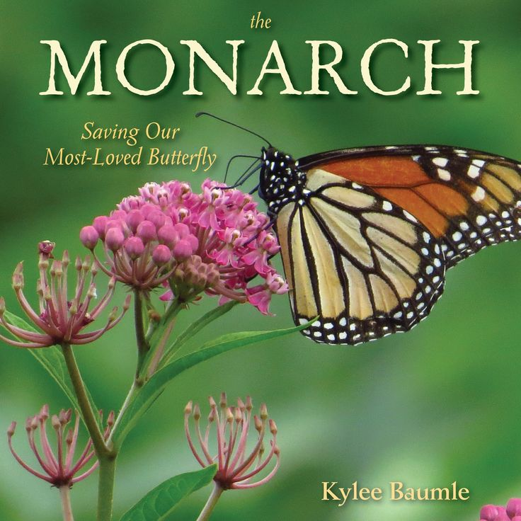 17 Best Images About Monarchs On Pinterest Life Cycles