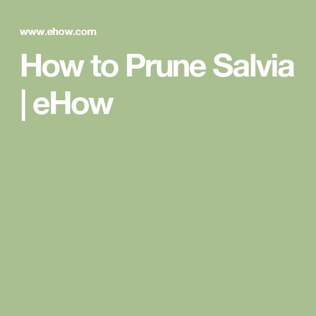 How to Prune Salvia | eHow